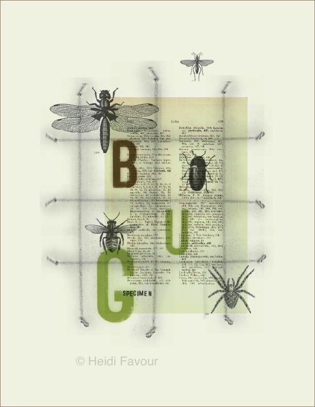 bug display